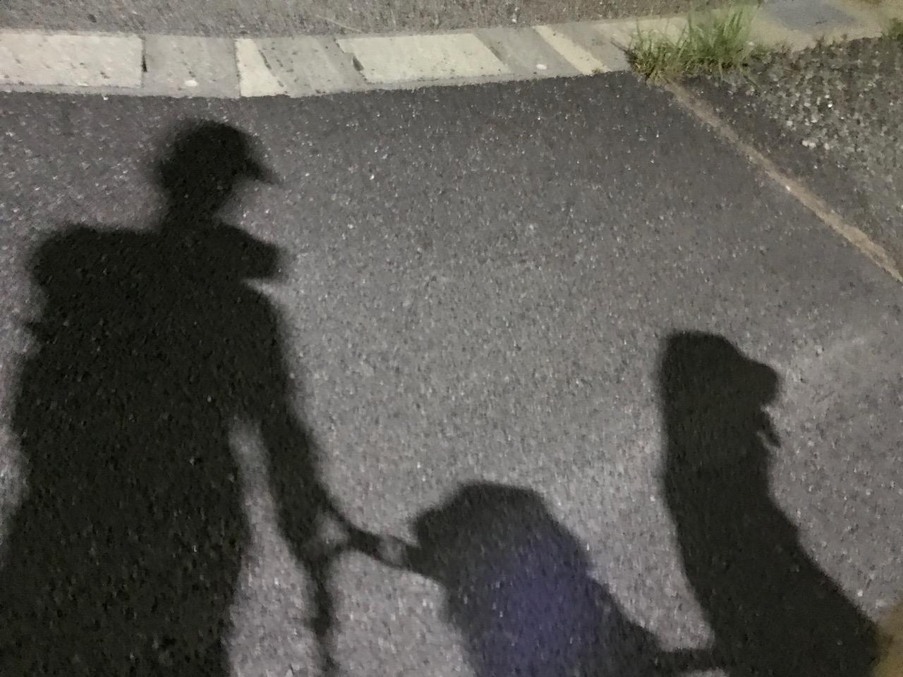 夜の犬ラン